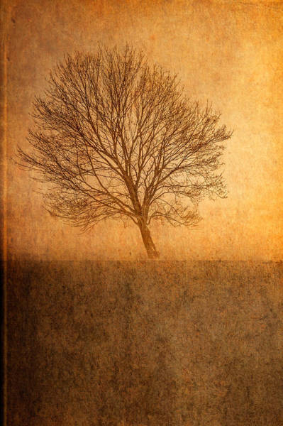 Photograph - Single Tree by Garvin Hunter