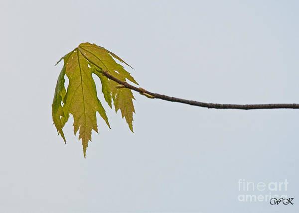 Photograph - Single by Wanda Krack
