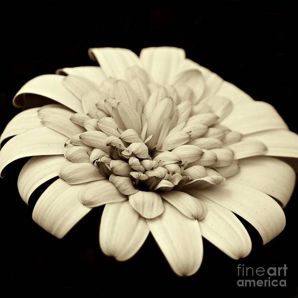 Photograph - Single White Flower by Patricia Strand