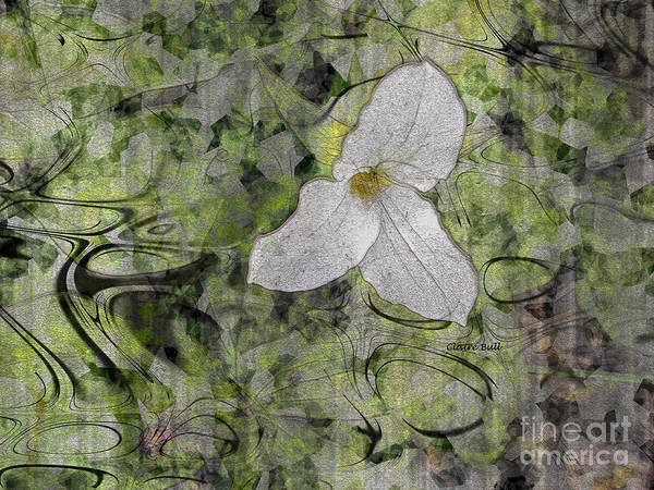 Photograph - Single White Trillium by Claire Bull