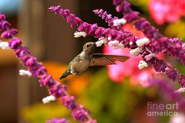 Photograph - Single Wing by Adam Jewell