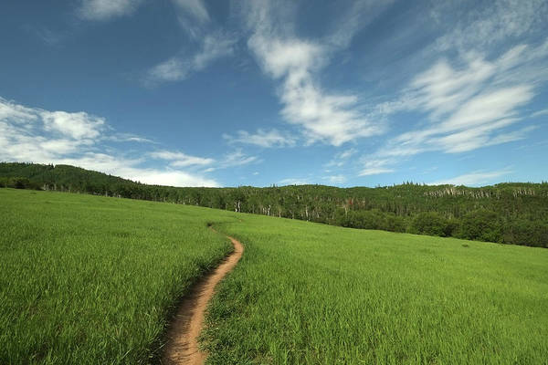 Steamboat Springs Photograph - Singletrack Trail Running Thru Meadow by David Epperson