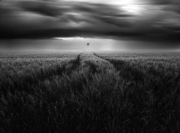 Crops Photograph - Singularity #2 by Luca Rebustini
