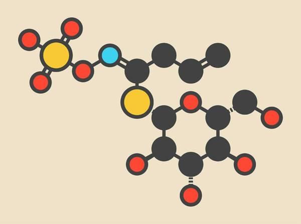 Pungent Photograph - Sinigrin Glucosinolate Molecule by Molekuul/science Photo Library