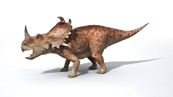 Wall Art - Photograph - Sinoceratops Male Dinosaur by Jose Antonio Penas/science Photo Library
