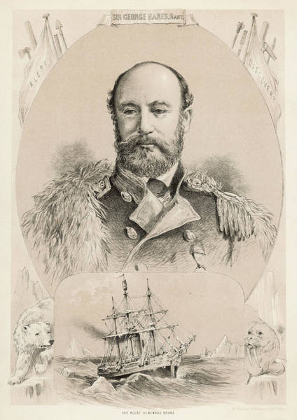 Polar Bear Drawing - Sir George Strong Nares  British Naval by Mary Evans Picture Library