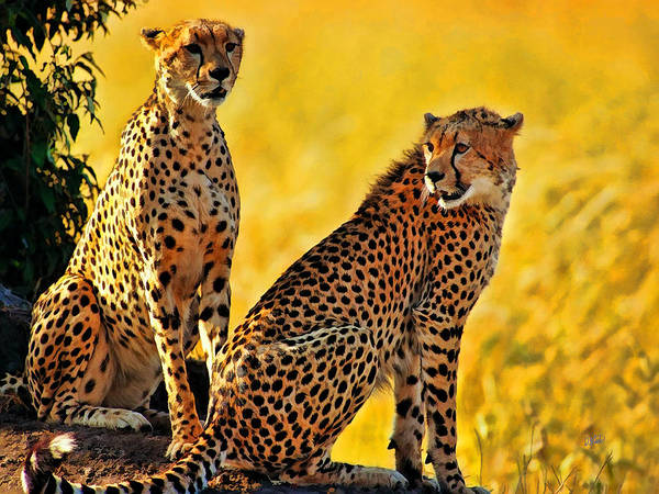 Painting - Sister Cheetahs by Dean Wittle