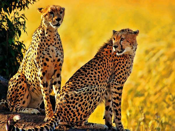Sister Cheetahs Art Print