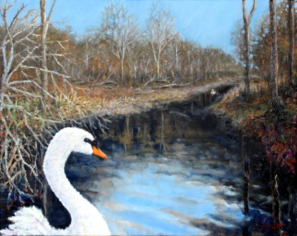 Water Foul Painting - Sister Swans by Graham Keith