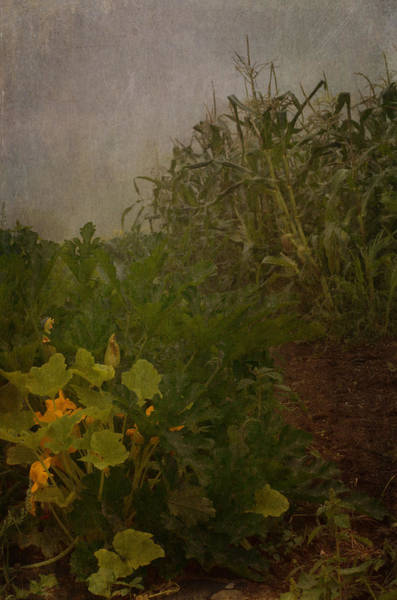 Vegetable Garden Photograph - Sisters by Susan Capuano