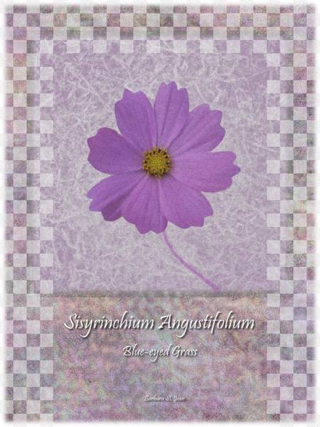 Digital Art - Sisyrinchium Wild Flower Bc Poster 3 by Barbara St Jean
