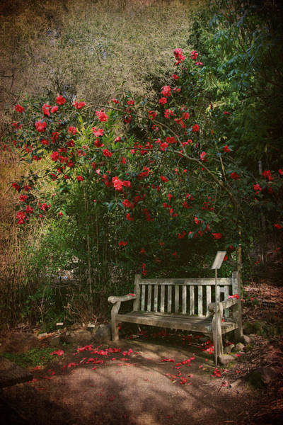 Park Bench Photograph - Sit With Me Here by Laurie Search