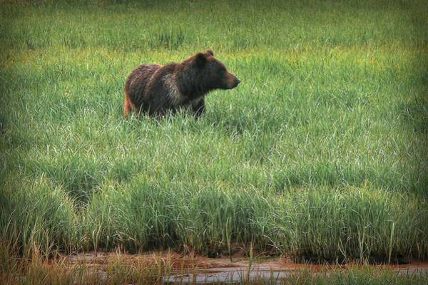 Grizzly Bears Photograph - Sitka Grizzly by Ryan Smith