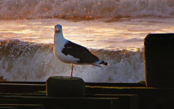 Photograph - Sittin On The Dock Of The Bay by David Dehner