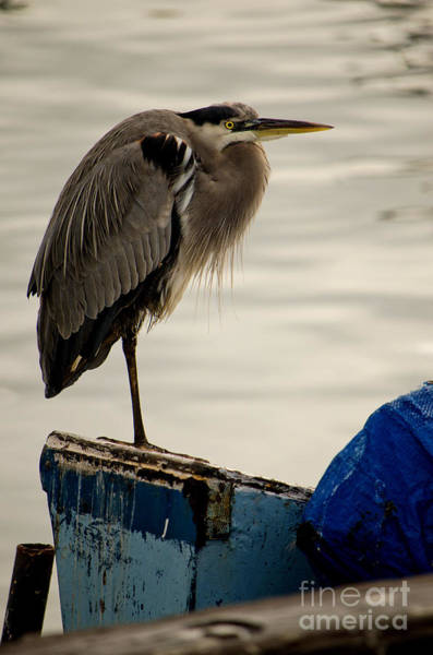 Photograph - Sittin' On The Dock Of The Bay by Donna Greene