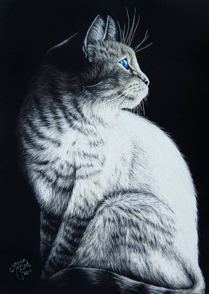 Drawing - Sitting Cat by Monique Morin Matson