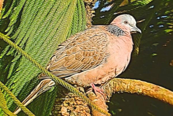 Mixed Media - Sitting Dove by Pamela Walton