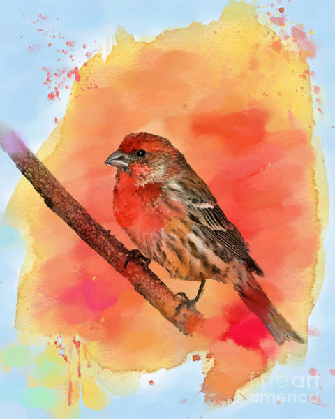 House Finch Photograph - Sitting For My Portrait by Betty LaRue