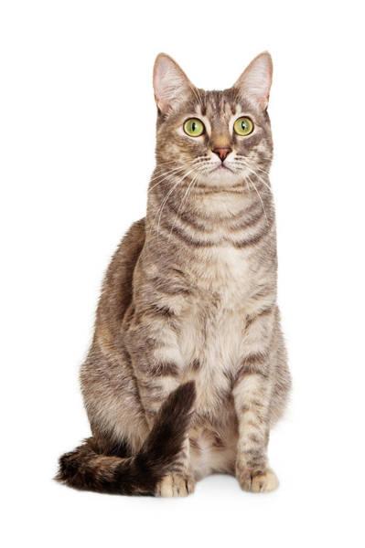 Wall Art - Photograph - Sitting Gray Tabby Cat by Susan Schmitz