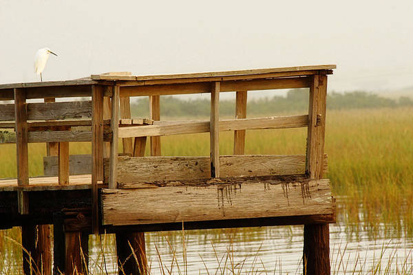 Everglades Photograph - Sitting On The Dock by Rebecca Cozart