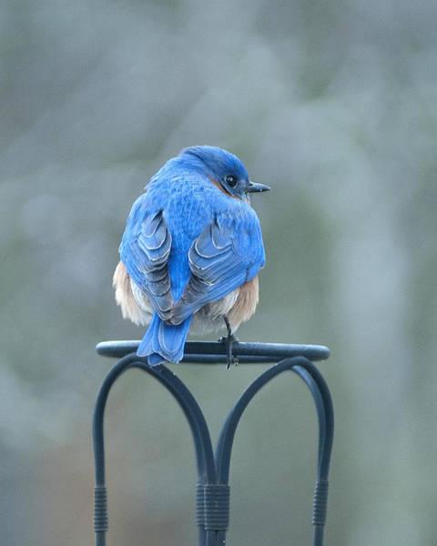 Photograph - Sitting Pretty by Carol Erikson