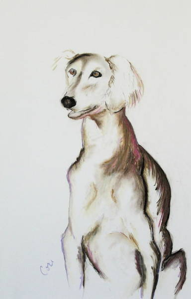 Sight Hound Drawing - Sitting Pretty by Cori Solomon