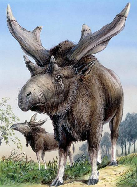 Ruminant Photograph - Sivatherium by Michael Long/science Photo Library