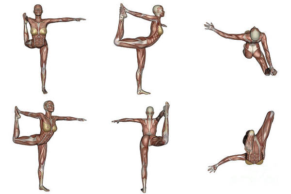 Muscle Tissue Digital Art - Six Different Views Of Dancer Yoga Pose by Elena Duvernay