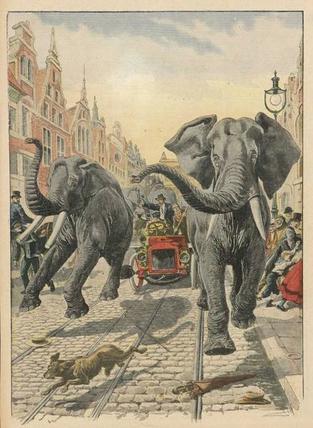 Wall Art - Drawing - Six Elephants From A Menagerie by Mary Evans Picture Library