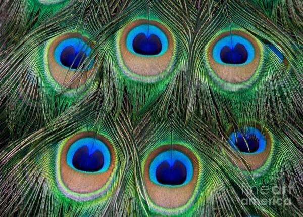 Photograph - Six Eyes by Sabrina L Ryan