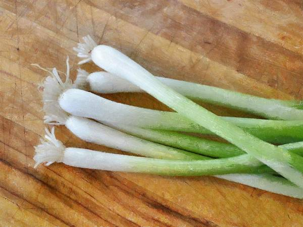 Photograph - Six Scallions by Michelle Calkins