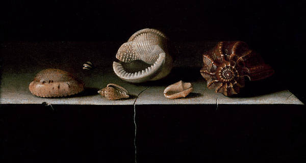 Six Painting - Six Shells On A Stone Shelf by Adrian Coorte