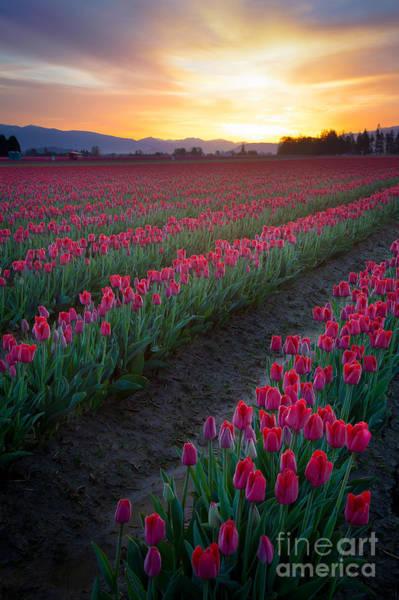 Mount Vernon Photograph - Skagit Valley Blazing Sunrise by Inge Johnsson