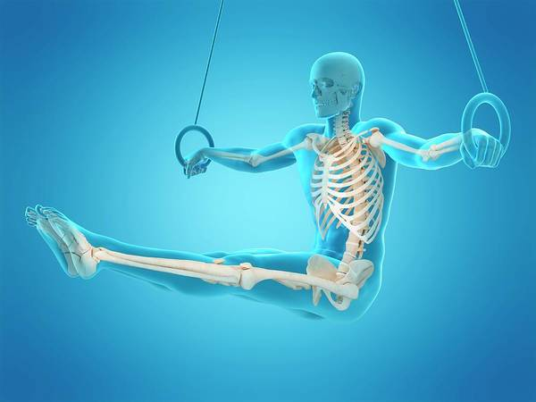 Wall Art - Photograph - Skeletal Structure Of Athlete by Sebastian Kaulitzki/science Photo Library