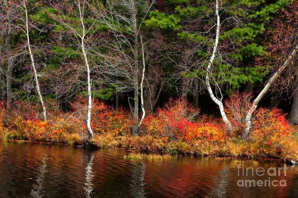 Photograph - Skeleton Branches In Autumn  by Marcia Lee Jones