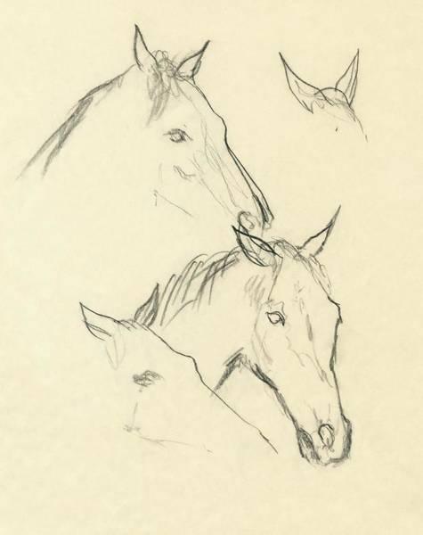 Animals Digital Art - Sketch Of A Horse Head by Carl Oscar August Erickson