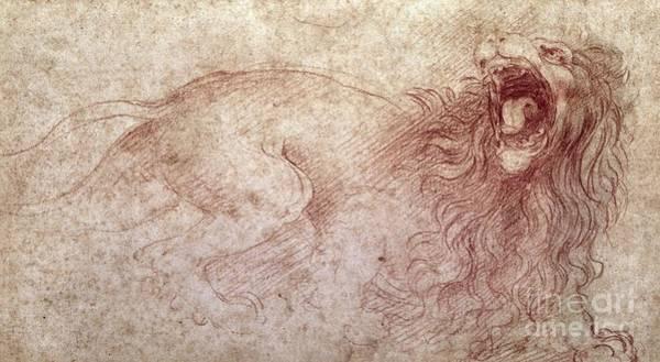 Creature Drawing - Sketch Of A Roaring Lion by Leonardo Da Vinci