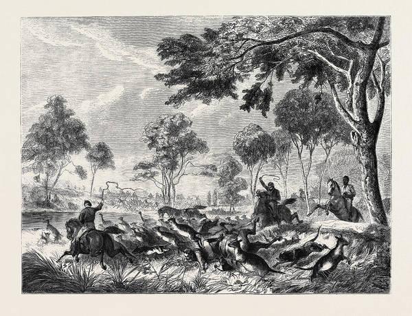 Kangaroo Drawing - Sketches In Australia Kangaroo Hunting by Australian School