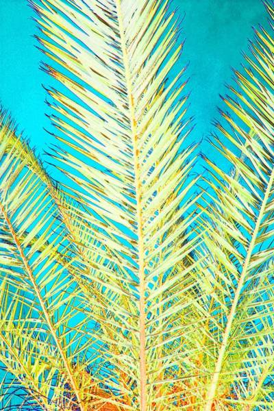Photograph - Sketchy Palm Fronds by Jeanne Forsythe