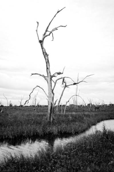 Photograph - Skeleton Of The Louisiana Coast by Andy Crawford