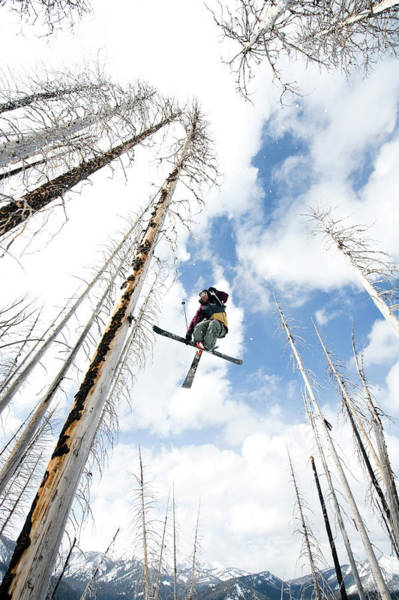 Wall Art - Photograph - Skier Catching Air Through Dead Trees by Meg Haywood-Sullivan