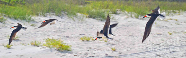 Photograph - Skimmers In Flight by George D Gordon III