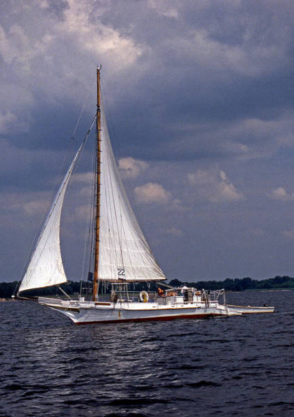 Sailing Terms Photograph - Skipjack Ellsworth by Skip Willits