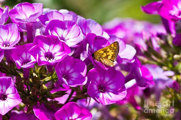 Photograph - Skipper Butterfly On Flower by Ms Judi