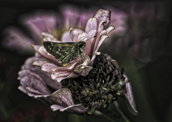 Photograph - Skipper On Flower by Donald Brown