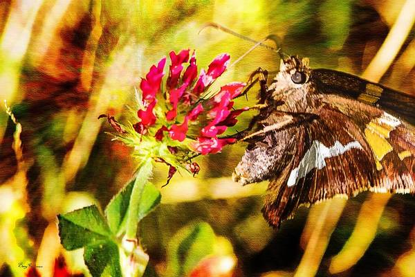Photograph - Butterfly - Clover - Skipper On The Prowl by Barry Jones