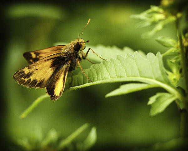 Photograph - Skipper X by Donald Brown
