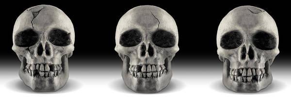 Human Bone Wall Art - Photograph - Skull 4 Panoramic by Mike McGlothlen