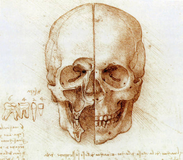 Wall Art - Photograph - Skull Anatomy By Leonardo Da Vinci by Sheila Terry