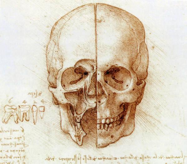 Photograph - Skull Anatomy By Leonardo Da Vinci by Sheila Terry